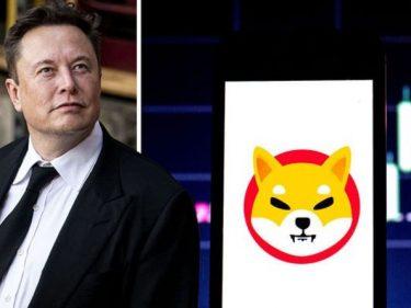Cours Shiba Inu (SHIB) en hausse, Elon Musk tweet qu'il ne possède que du Bitcoin (BTC), de l'Ethereum et du Dogecoin (DOGE)
